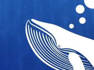 Big Blue Whale: web design, brand design and video production